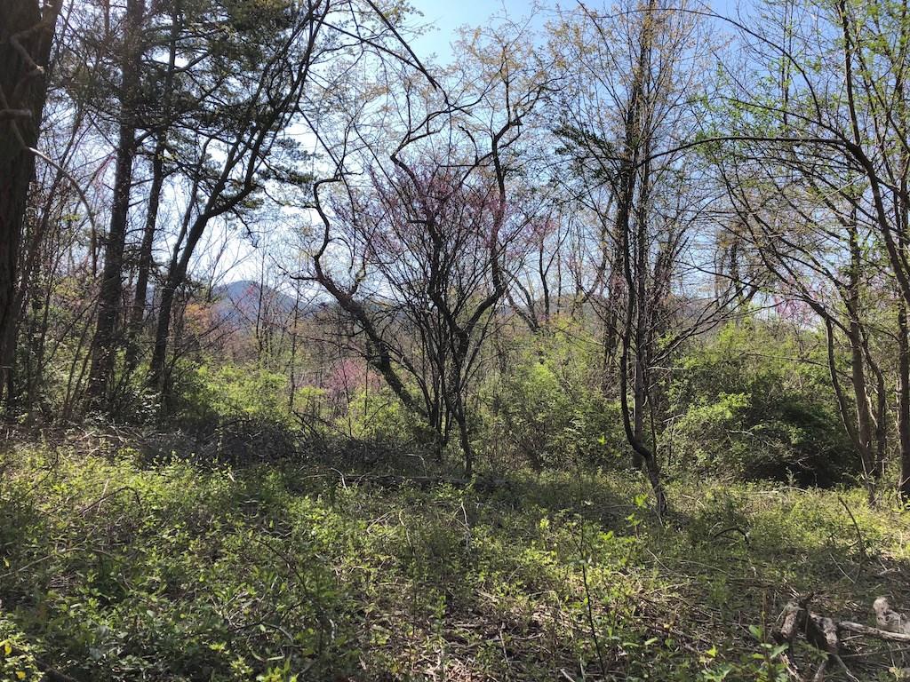 Lot for sale Elk Mtn Scenic Hwy Asheville NC