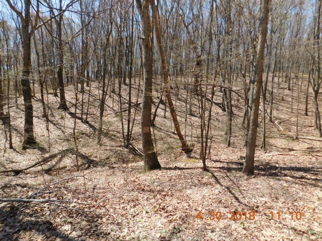 Land For Sale, Delray, WV!