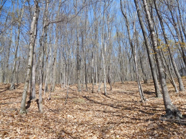 Land For Sale in Delray, WV!