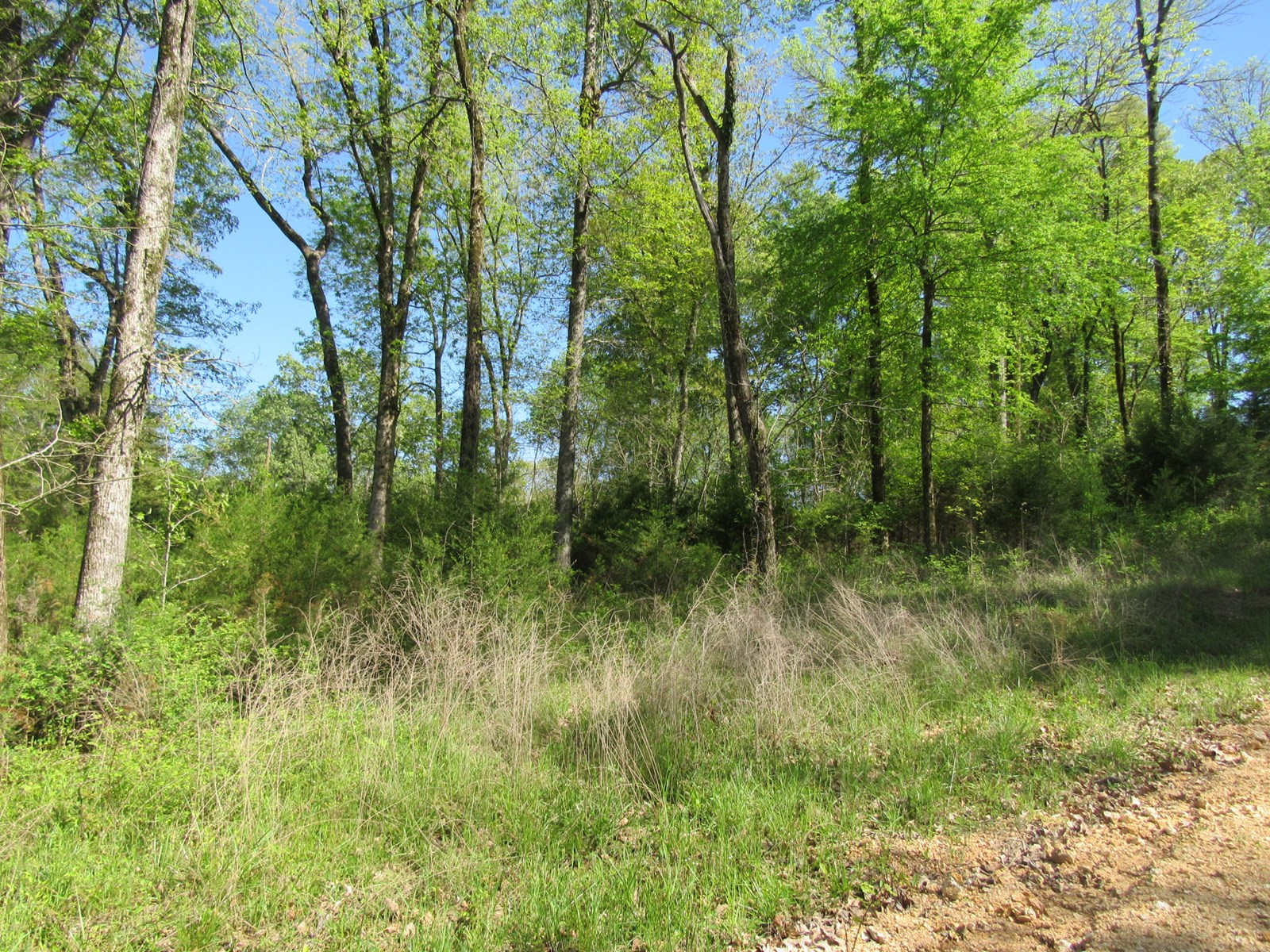 Building Lot for Sale near the Tennessee River