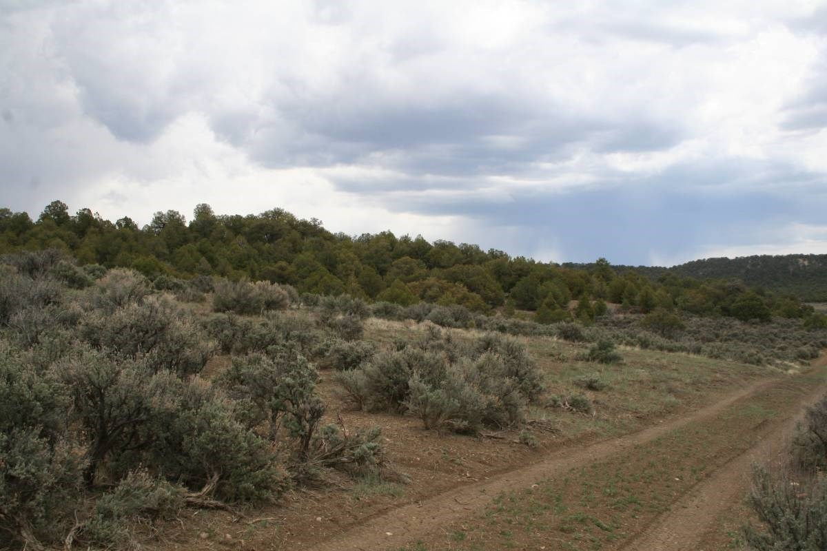 Land for sale near Chama NM below Brazos Cliffs Tress