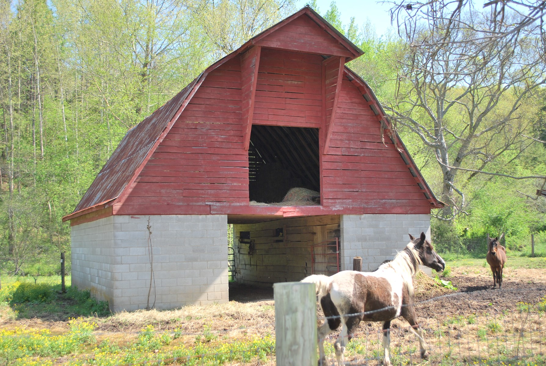Large 3 stall barn