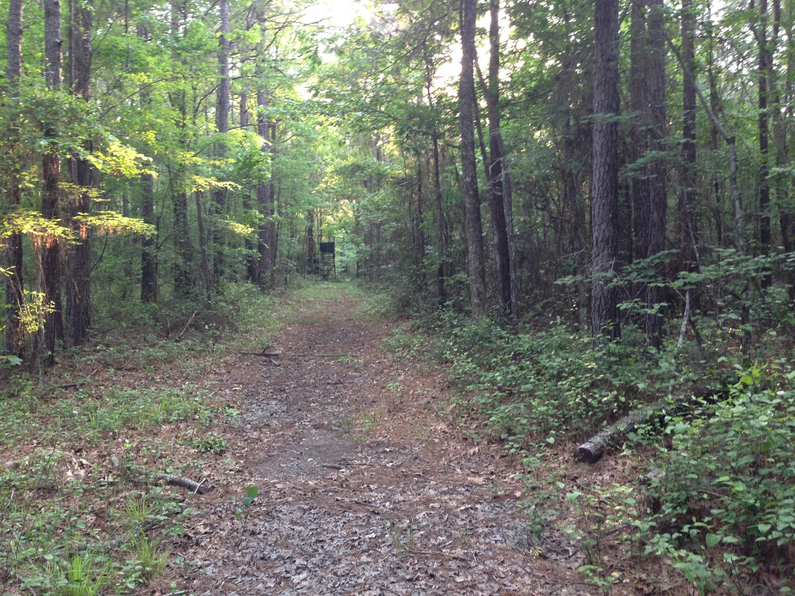 Mostly Pine Rural AR Timberland in Calhoun County for Sale