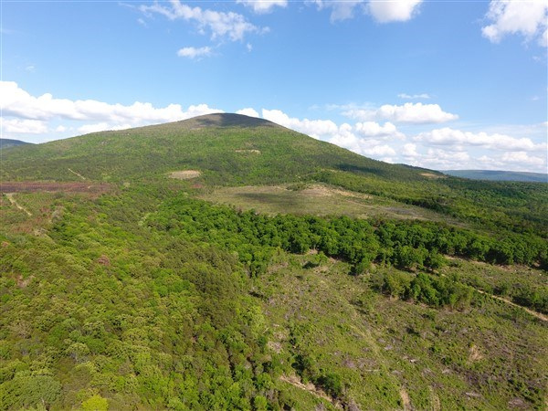 171 Acre Timber Investment and Hunting Property on Sugar Loa