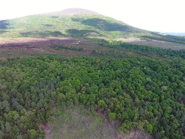 185 Acre Timber Investment and Hunting Property For Sale