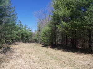 WOODED LAND NEAR THE TOWN OF FLOYD VA FOR SALE!