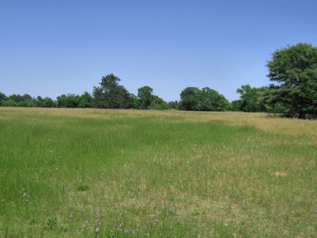RURAL ACREAGE FOR SALE W/ HOME NEAR FRANKSTON, EAST TX