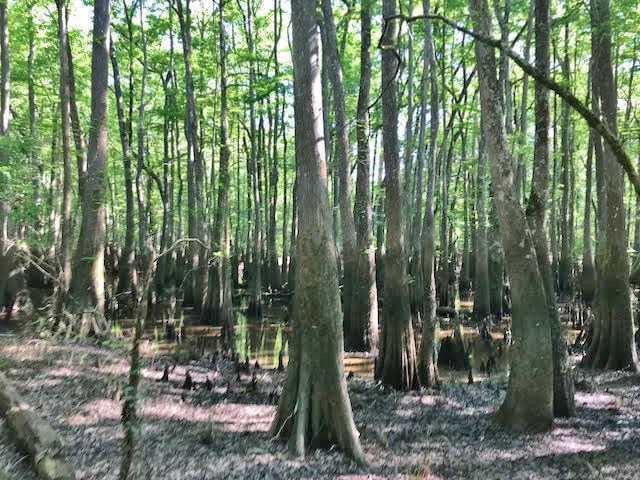 67 Acres Hunting Farming Land for Sale Pearl River Co, MS