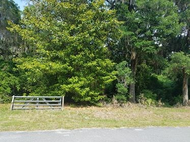 Gorgeous 1 acre Wooded tract!