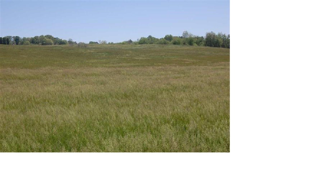Gently Rolling Farm Land in Morristown, TN Unrestricted Land