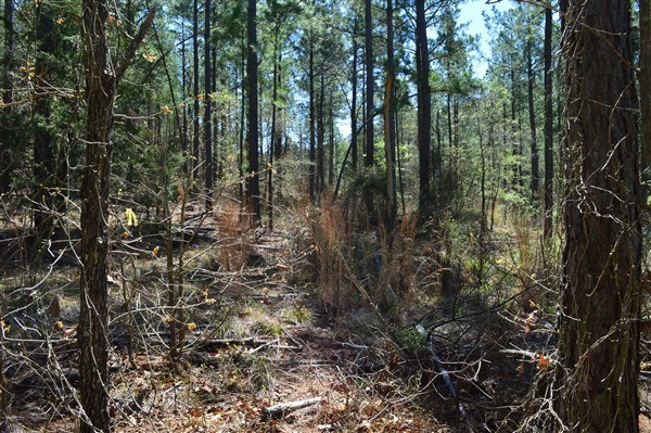 30 Acre Timber Investment and Hunting Property on Sugar Loaf