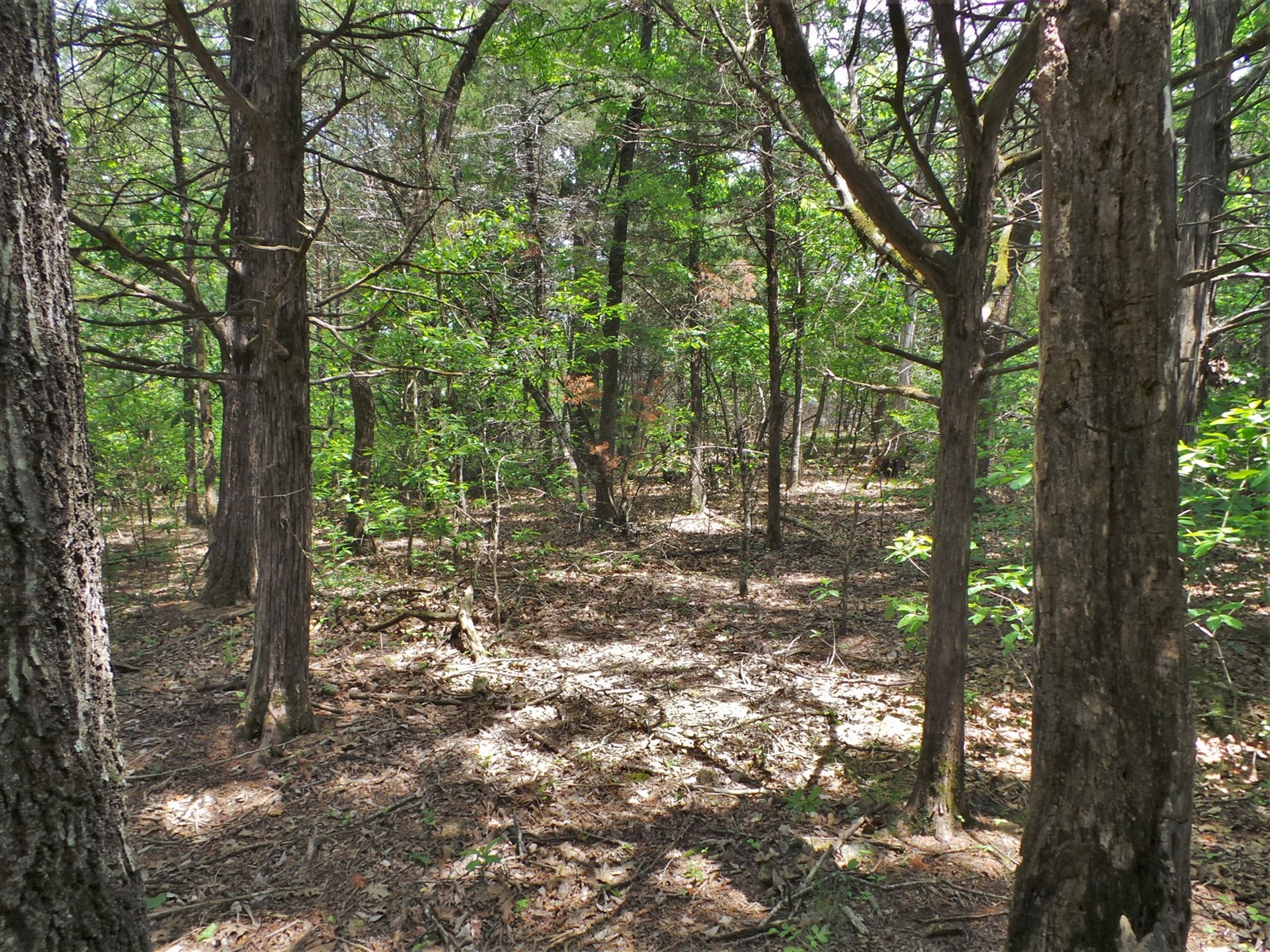 Bull Shoals Lakeside Community lots for sale