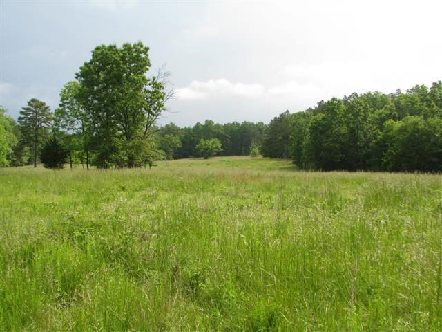 LAND FOR SALE IN MISSOURI NEAR NATIONAL FOREST - 40 ACRES