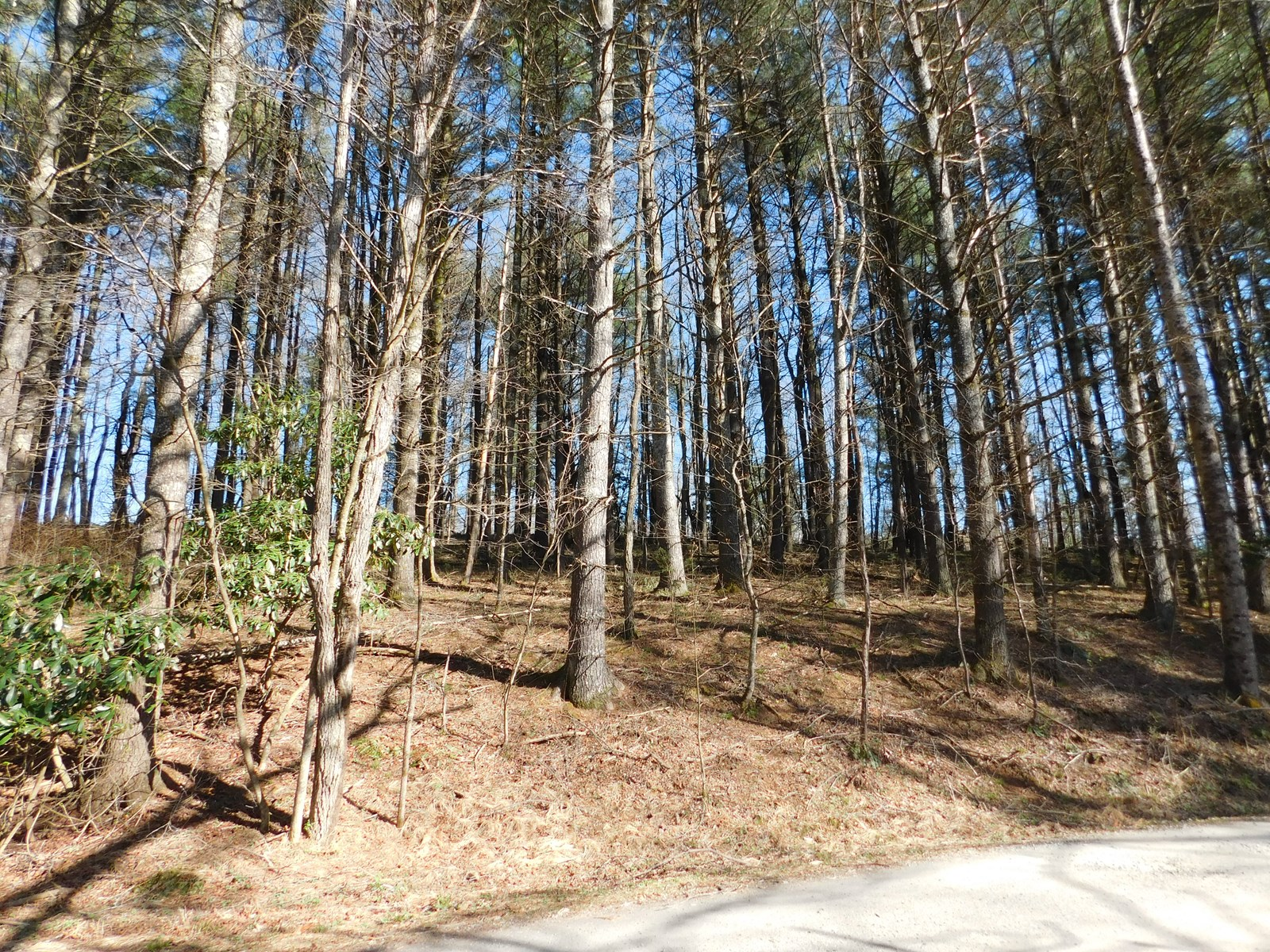 Mountain Building Lot Land for Sale Todd NC Ashe County