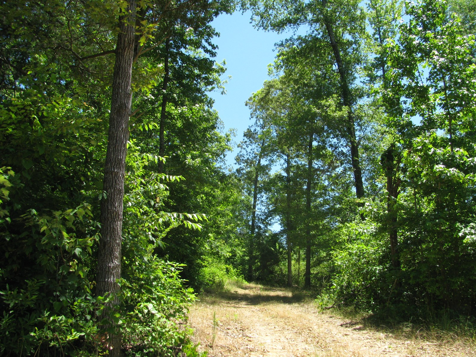 HUNTING OR BUILDING LAND FOR SALE IN MCNAIRY COUNTY, TN