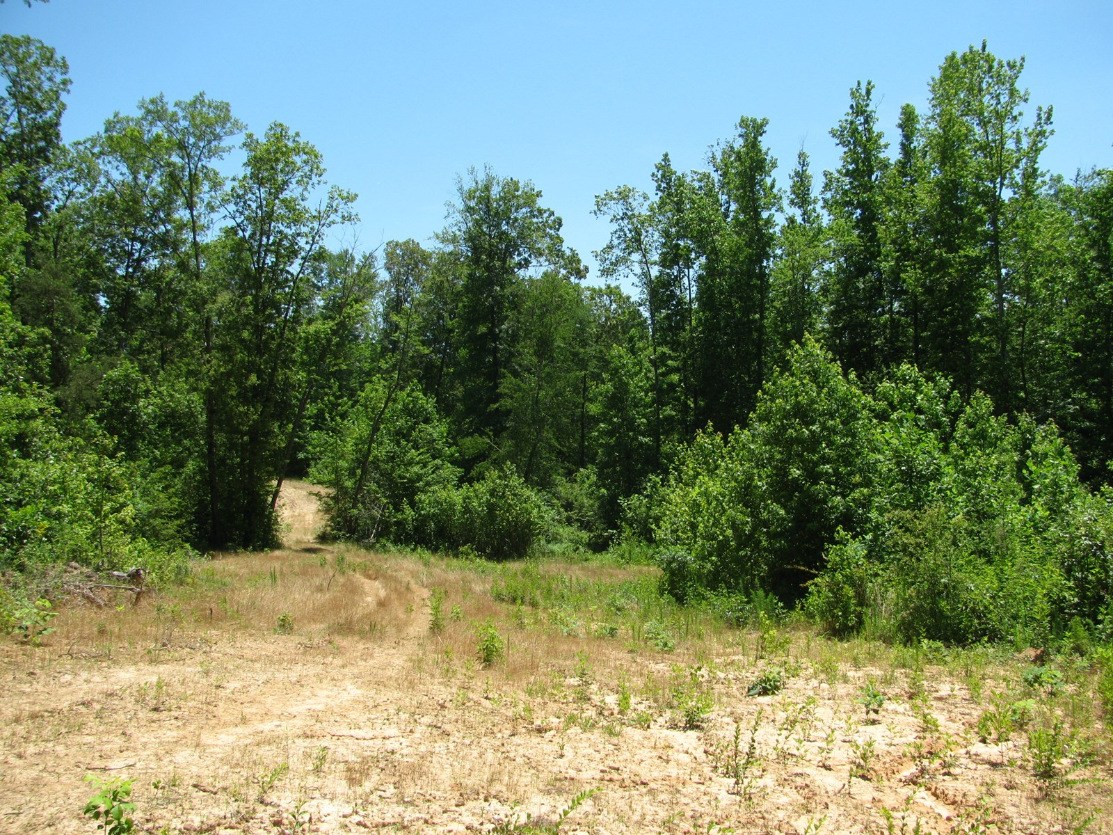 LAND FOR SALE IN MCNAIRY COUNTY, TN, CREEK, SPRING, HUNTING