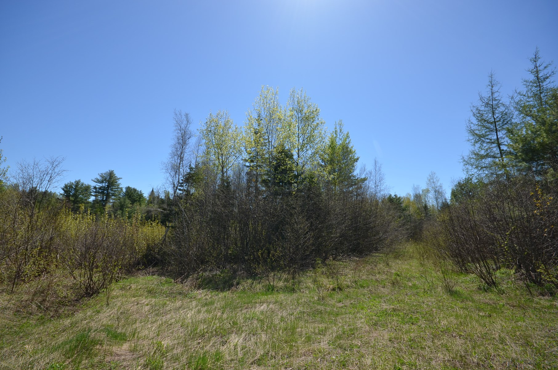 Maine Land for Sale in Bancroft