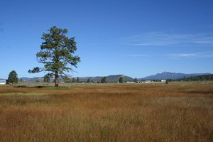 LAND FOR SALE NEAR CHAMA NM WITH RIVER ACCESS LEVEL LOT