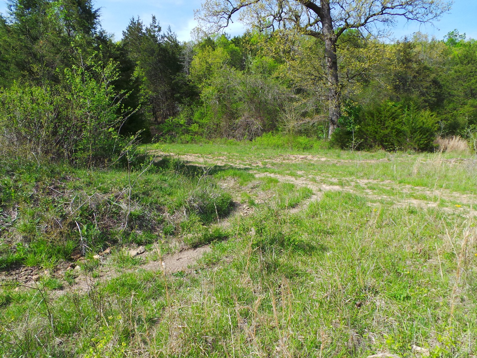 Land for sale with spring fed pond!!