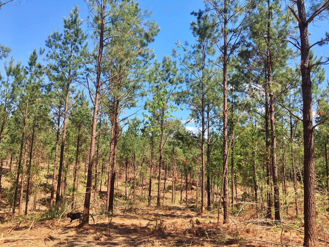 Small Acreage for Sale Amite County MS Home Site Camp Site