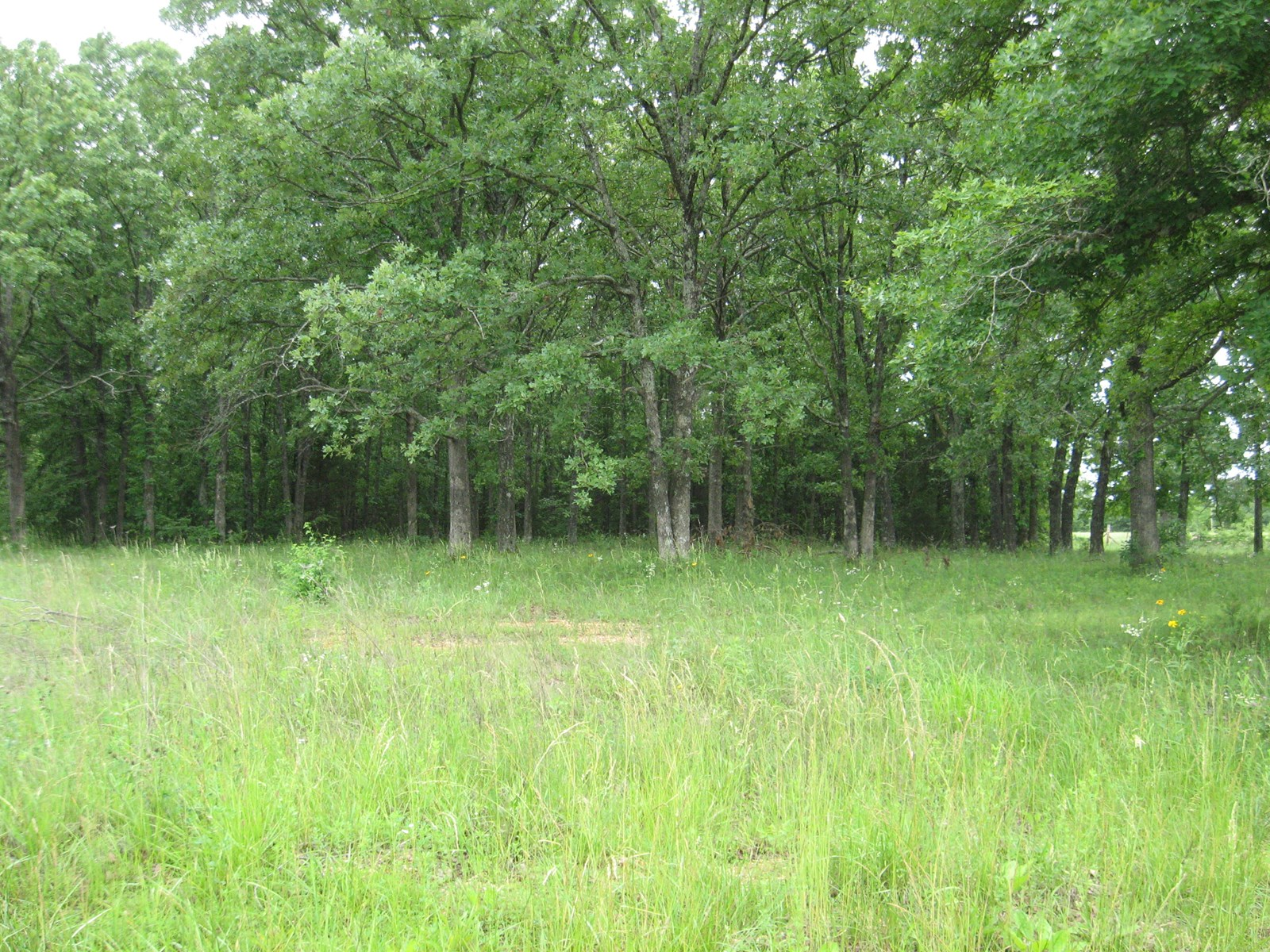 FOR SALE LAND TO BUILD A HOME OR MOBILE. FOR SALE LAND IN MO