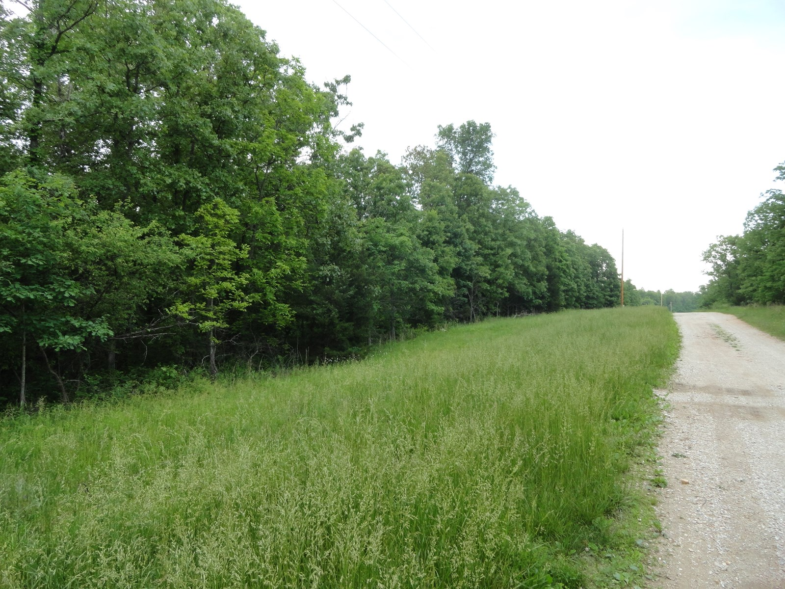 Wooded Acreage For Sale
