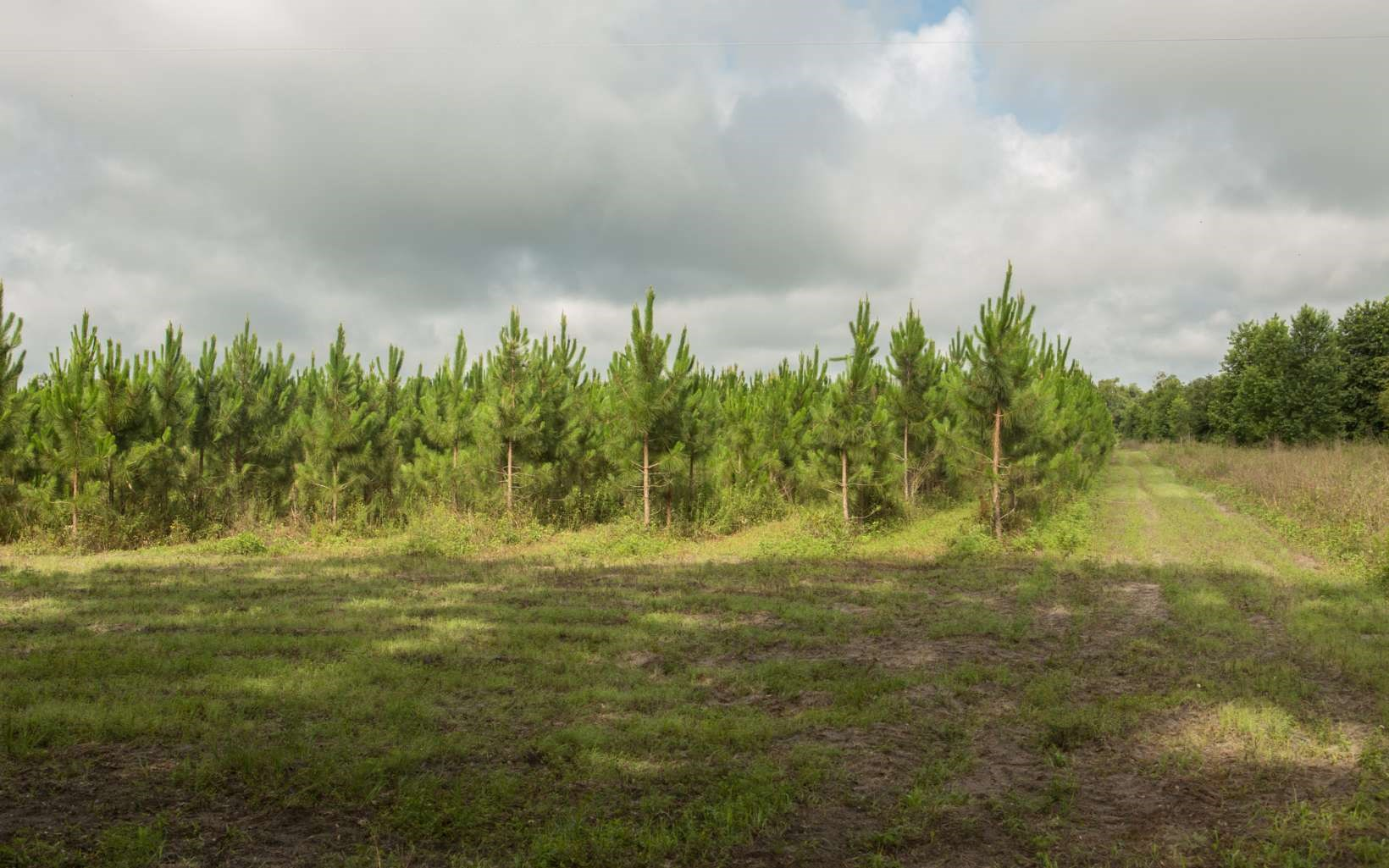 Nearly 10 Ac of Planted Pines For Sale in Mayo, FL