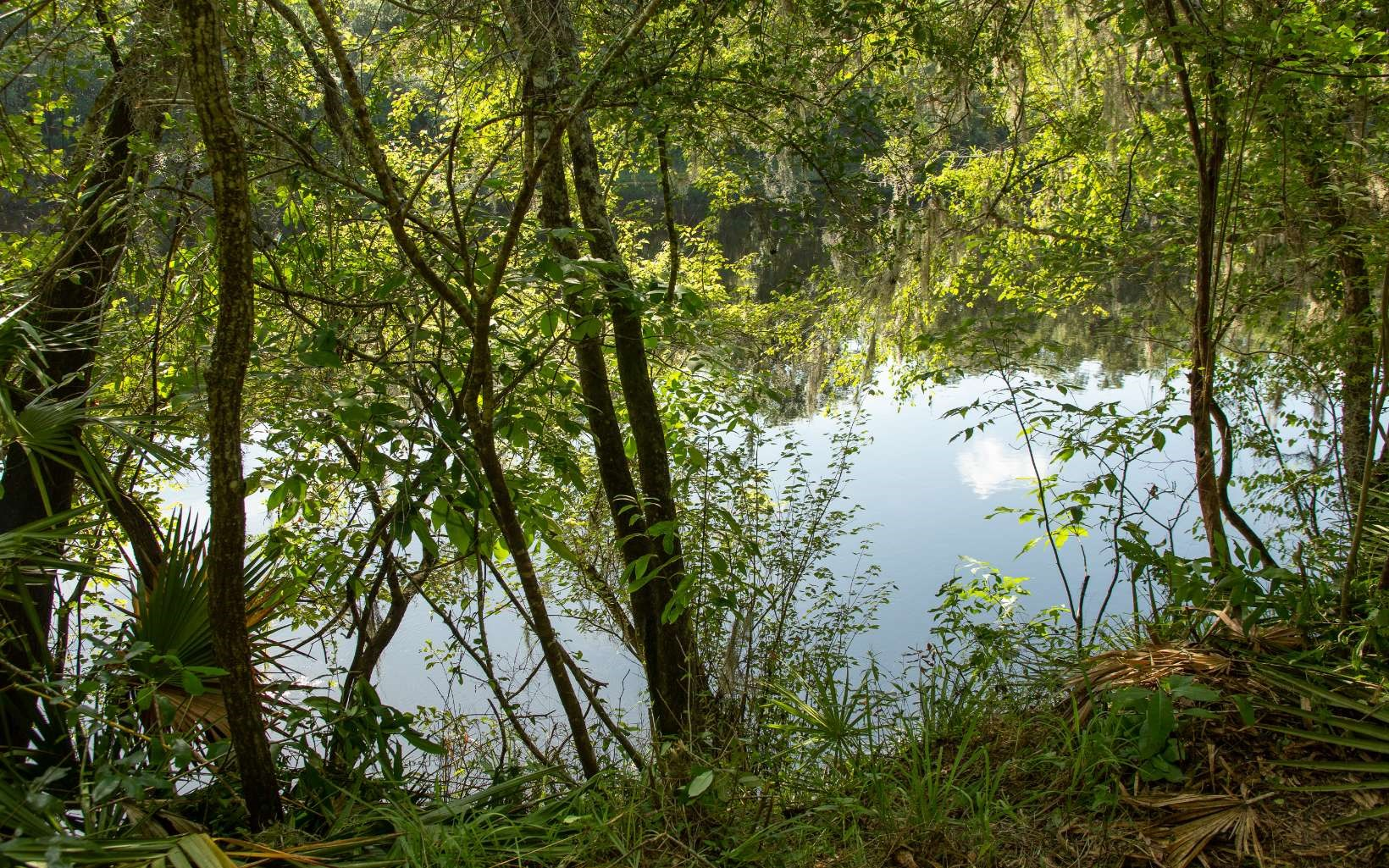 Cleared Suwannee River Lot