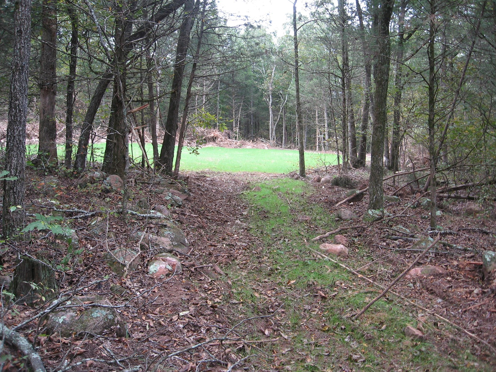 42.79 ACRES, ALL WOODED: