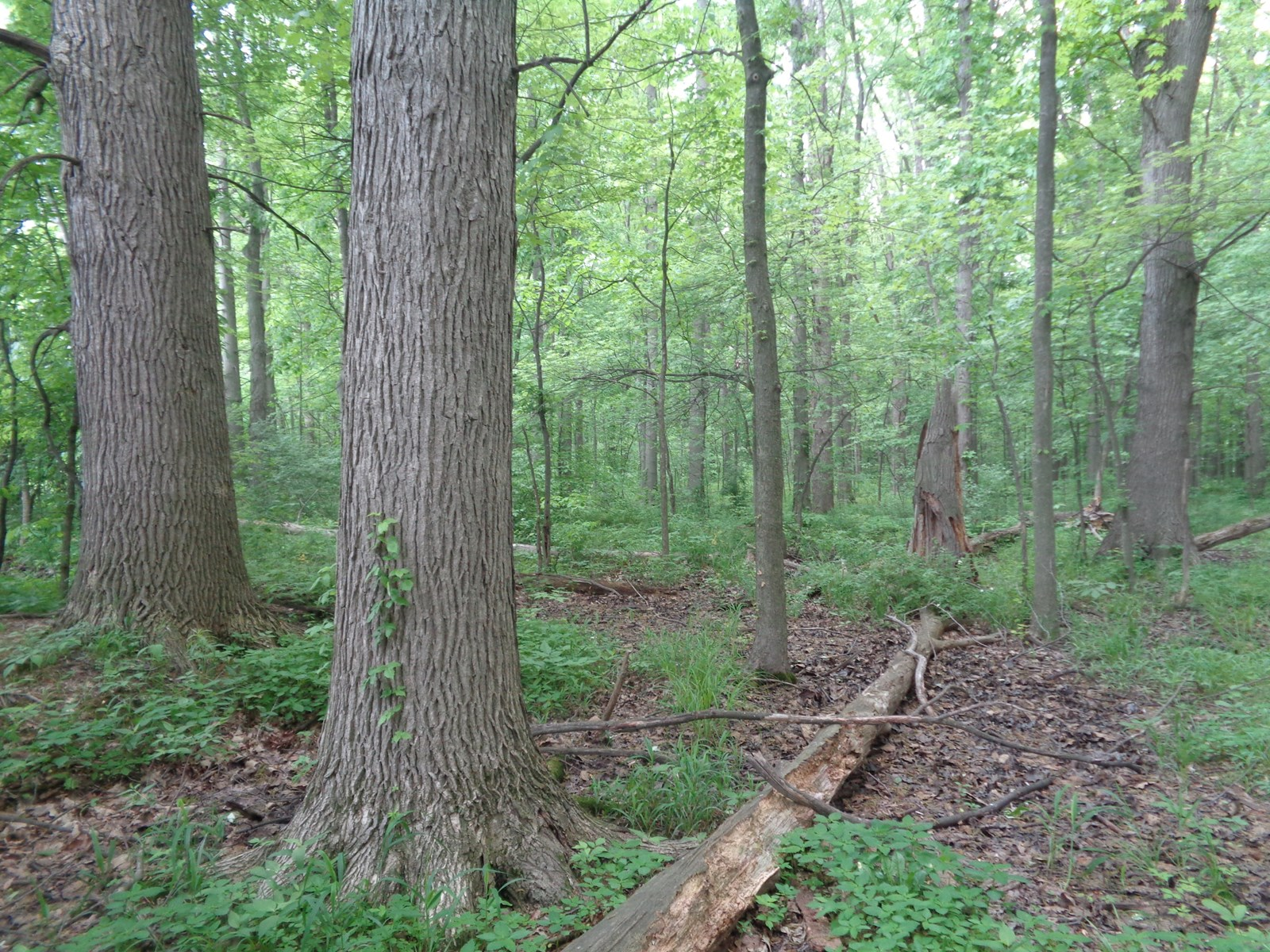 Real Estate Auction   Timber   Tillable and Hunting Ground