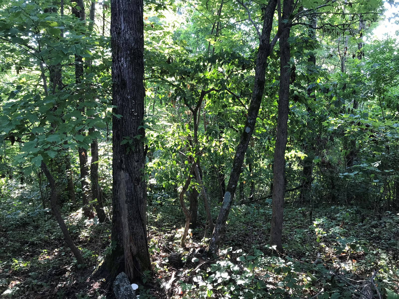 Recreational/Hunting Property for Sale Searcy Co., AR