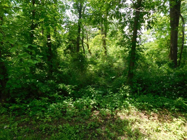 Land For Sale in Falling Waters, WV