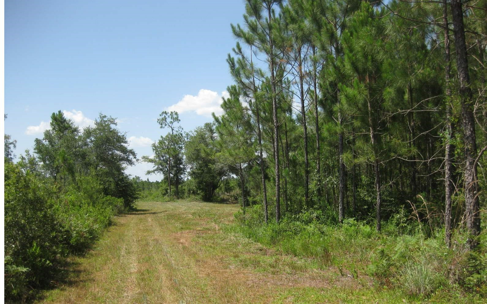 140 Acres of Natural North Florida Land For Sale