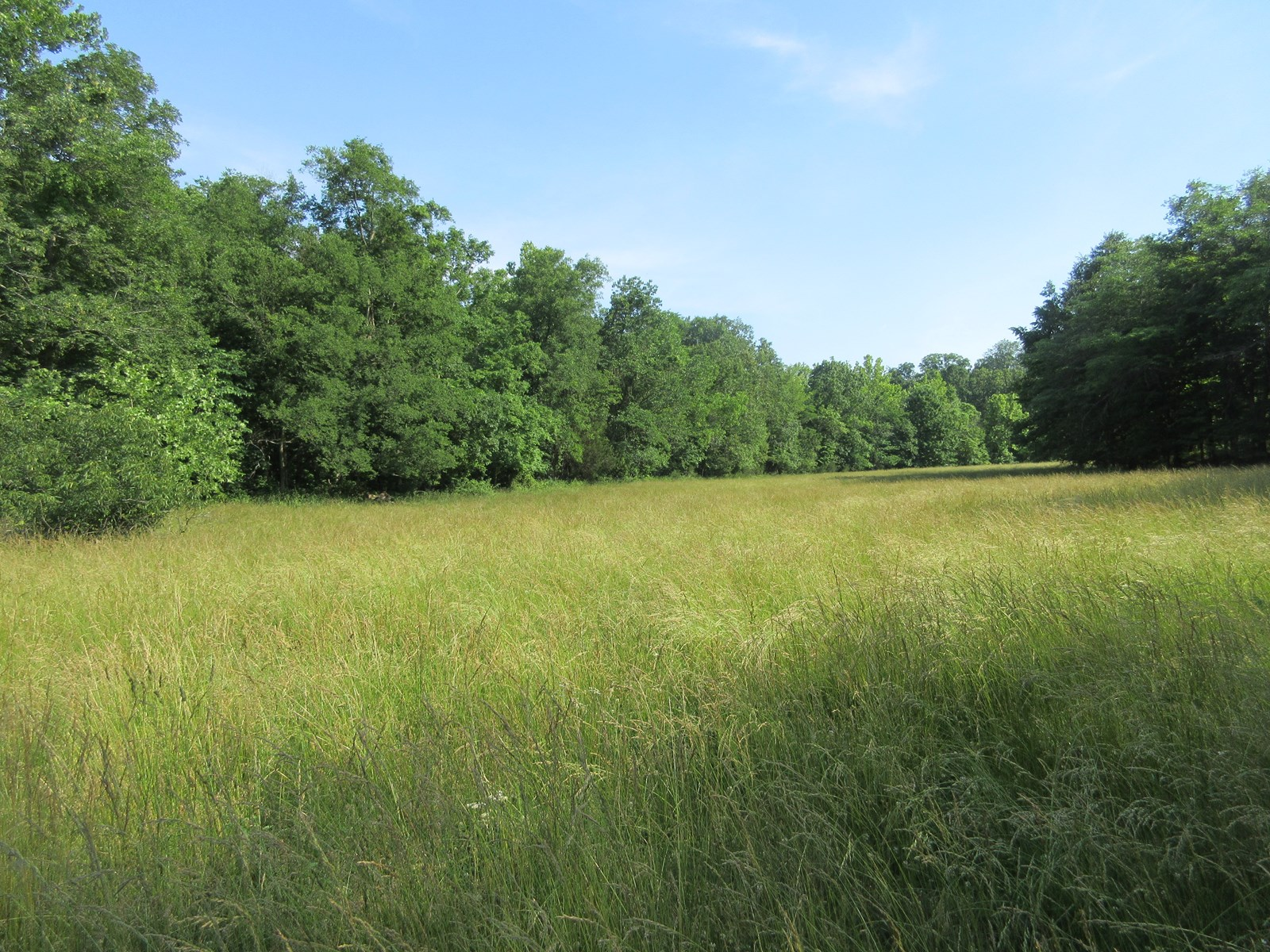 Land for Sale in Northern Bollinger County, Missouri