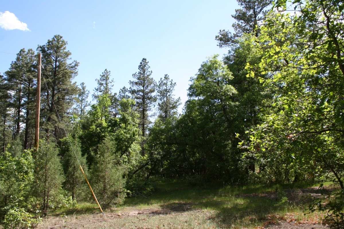 Land Fro Sale located Below The Brazos Cliffs South of Chama