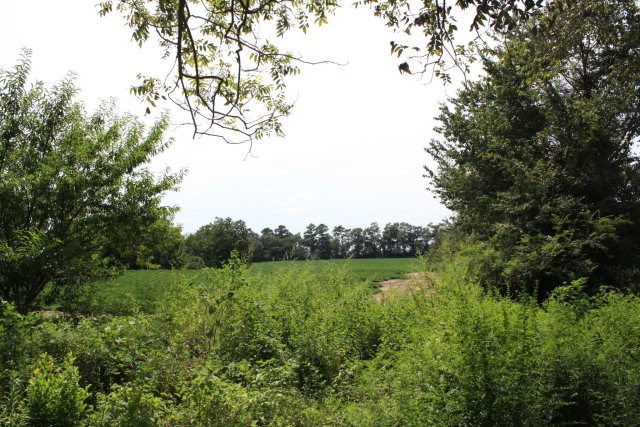 39 acres  in Geneva, County