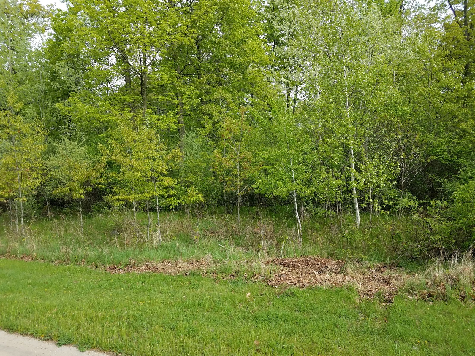 Vacant Land for Sale in Waupaca County WI Near Swan Park