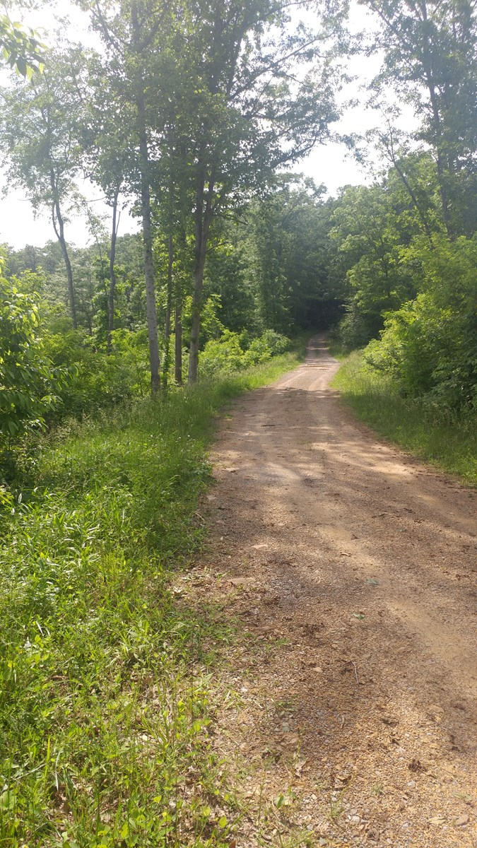 Prime Hunting or Vacation Land on 35.6 Acres, Bastian, VA!