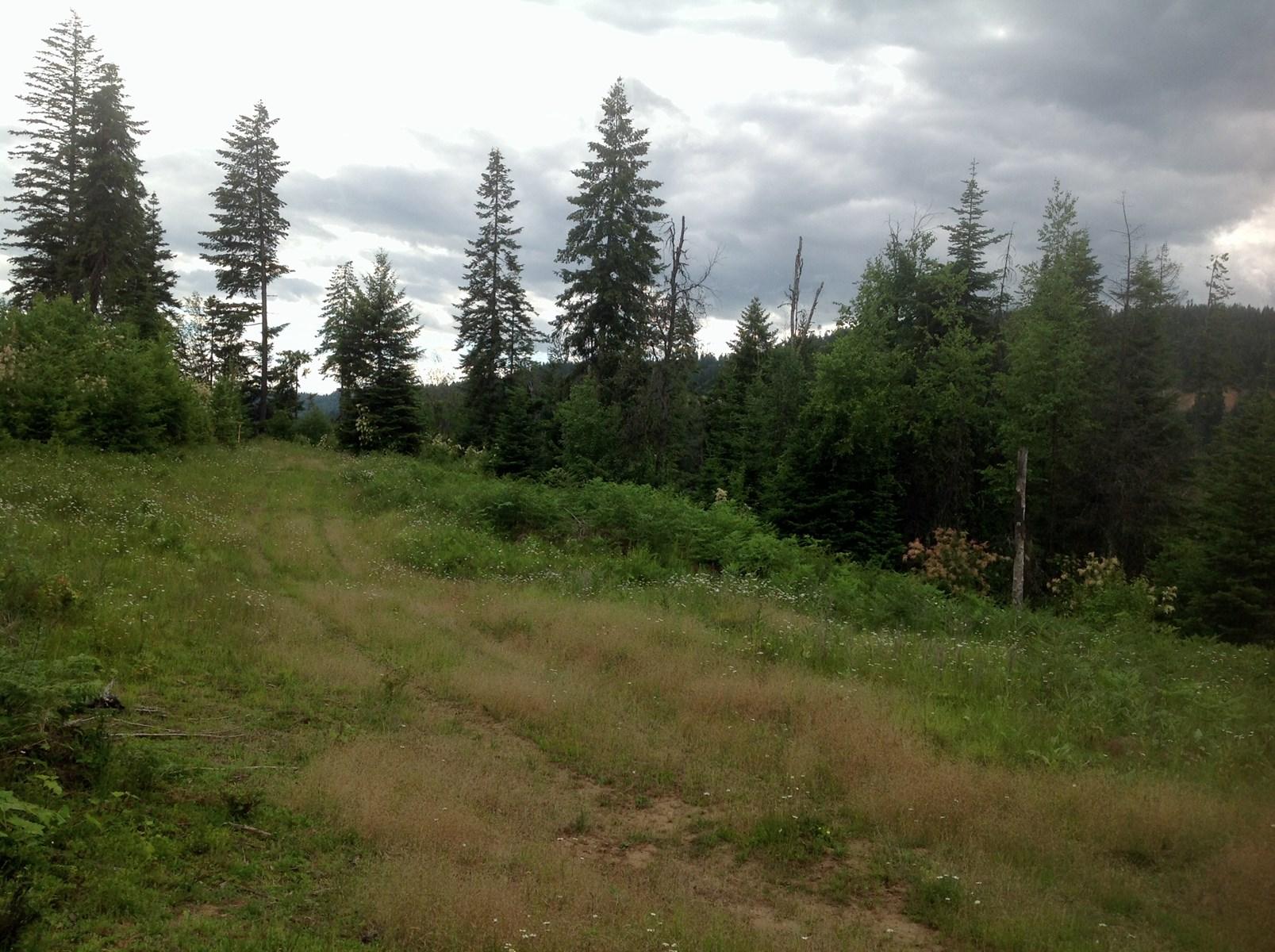 Building Site for sale close to Orofino, Idaho