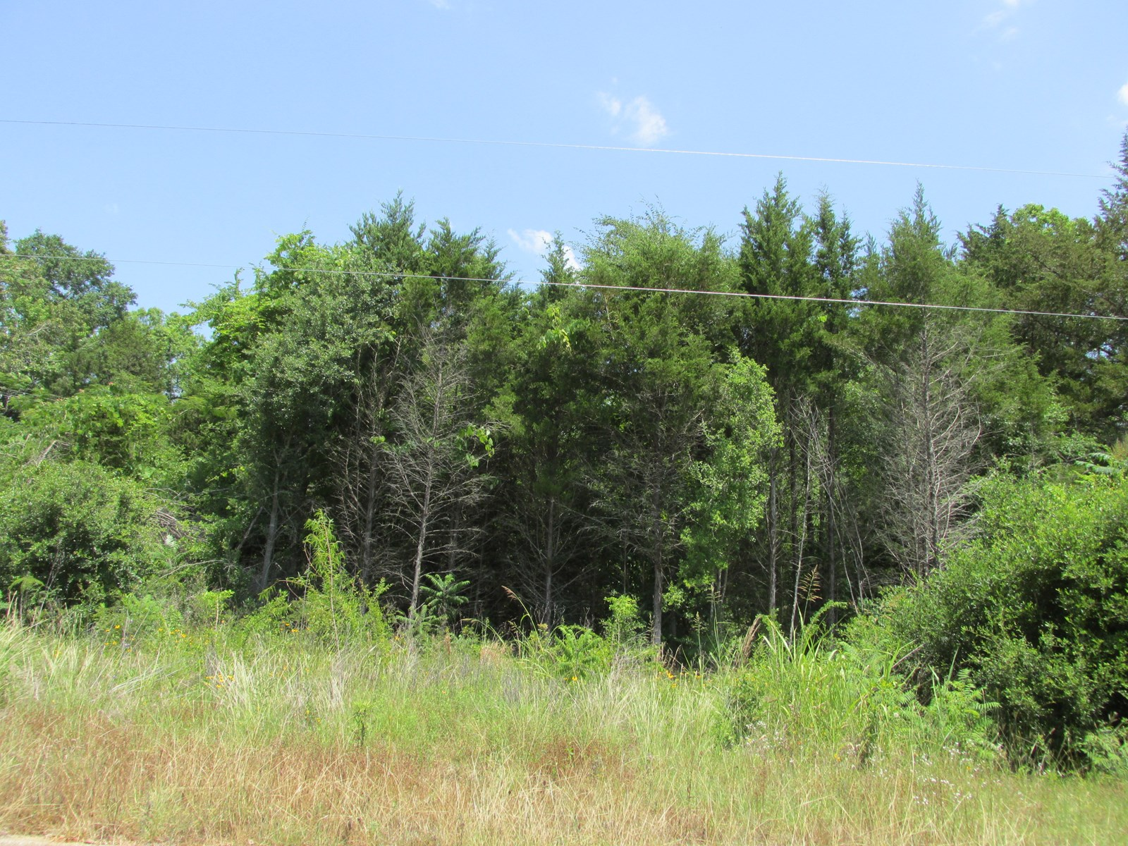 GREAT WOODED LOT INSIDE CITY LIMITS