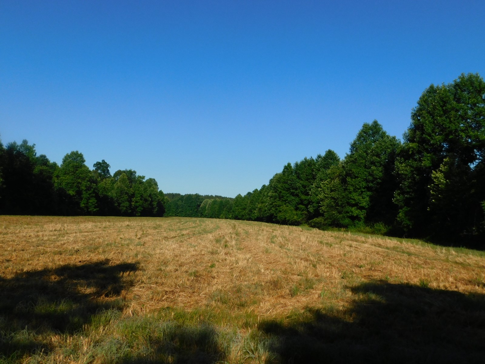 TN LAND FOR SALE, NO RESTRICTIONS, TIMBER, PASTURE, CREEK