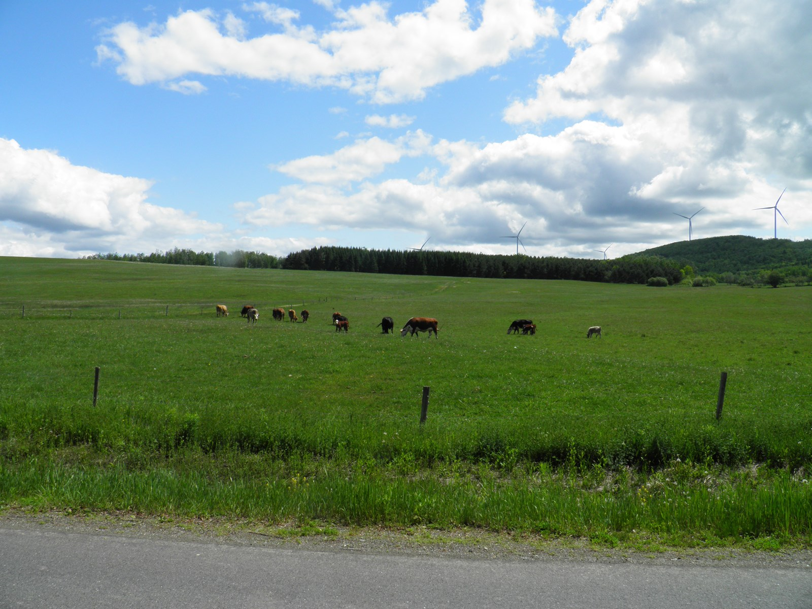 Maine Land for Sale in Oakfield