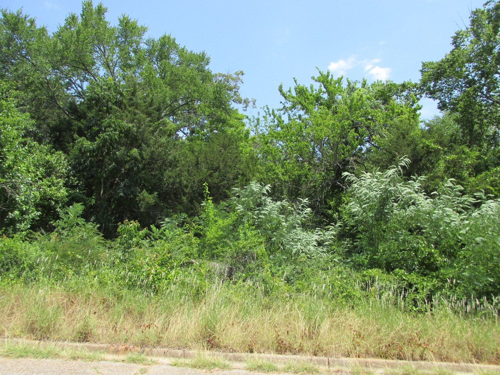 SMALL WOODED ACREAGE INSIDE CITY LIMITS