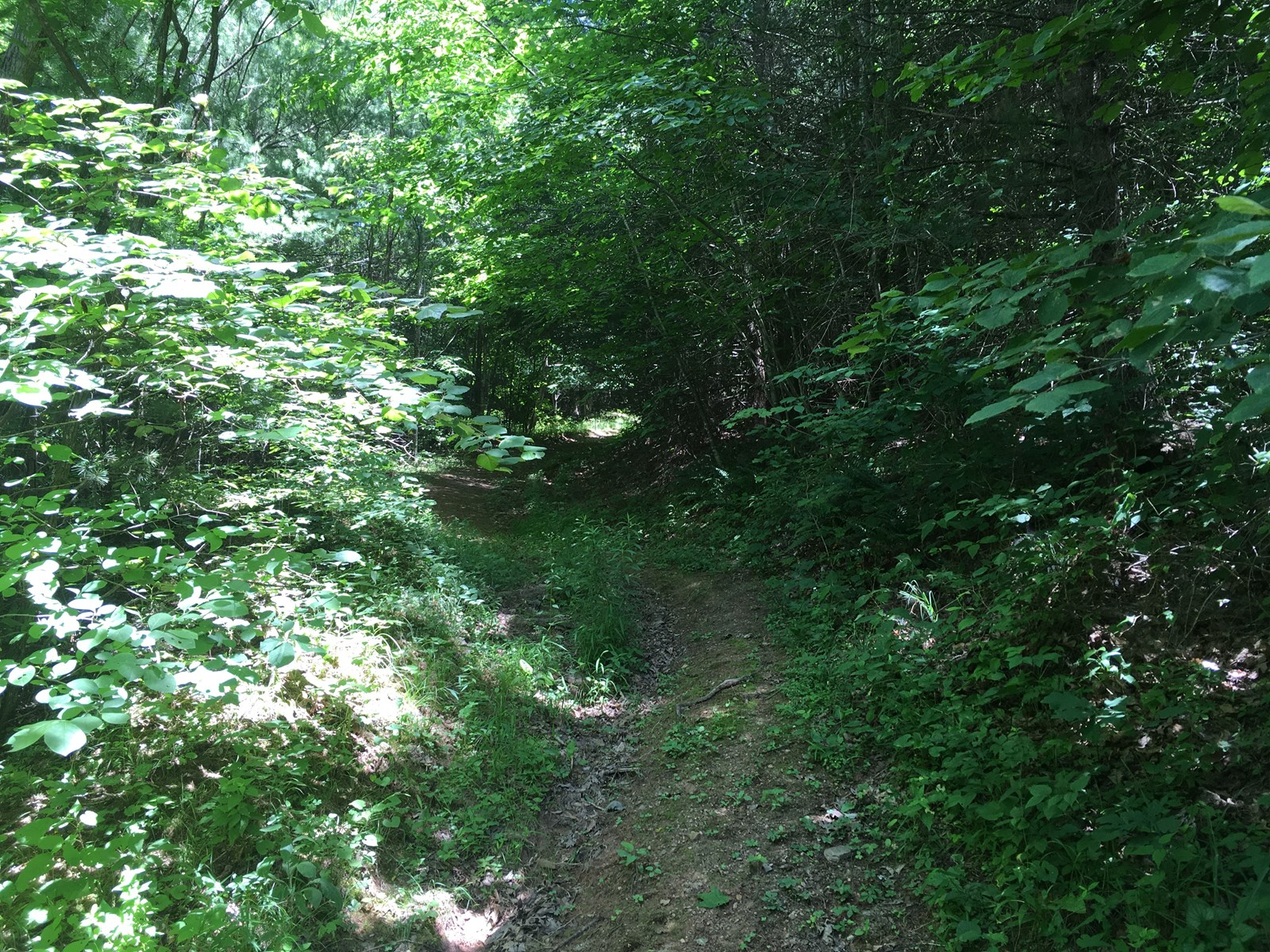 Wooded acreage in Wythe County VA