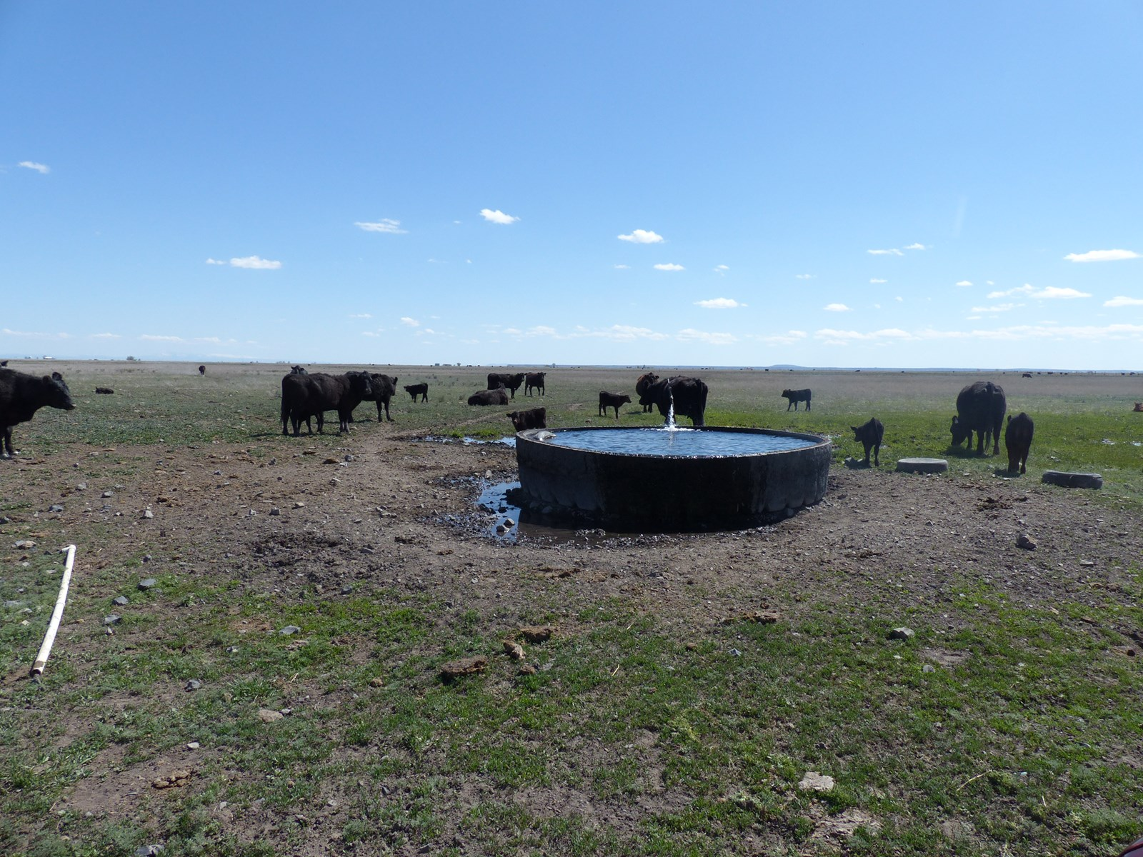 CATTLE PASTURE FOR SALE IN BURNS OR