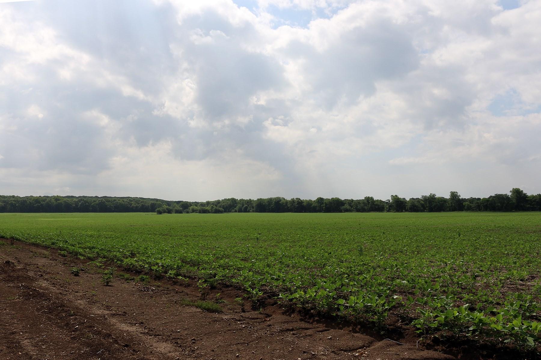 HIGHLY TILLABLE MACON COUNTY MO FARM FOR SALE