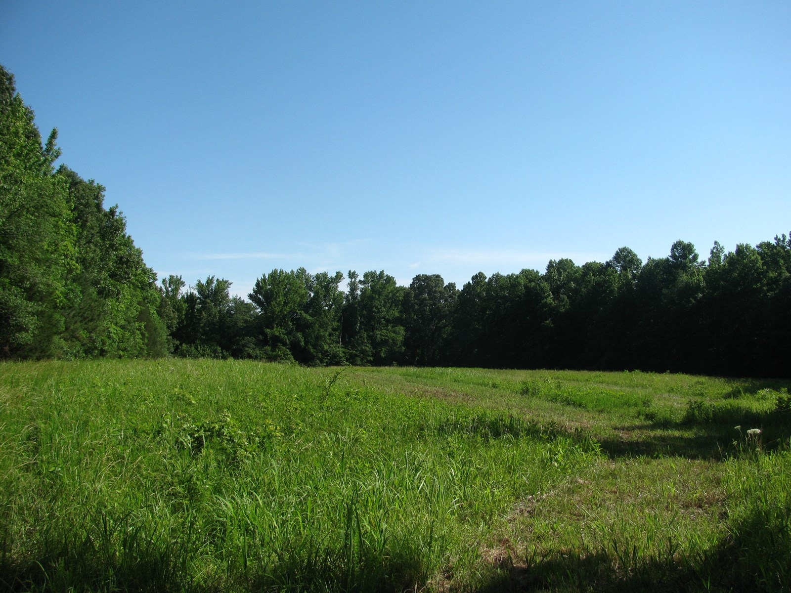 LAND IN HARDIN COUNTY, TN FOR SALE, TIMBER & OPEN