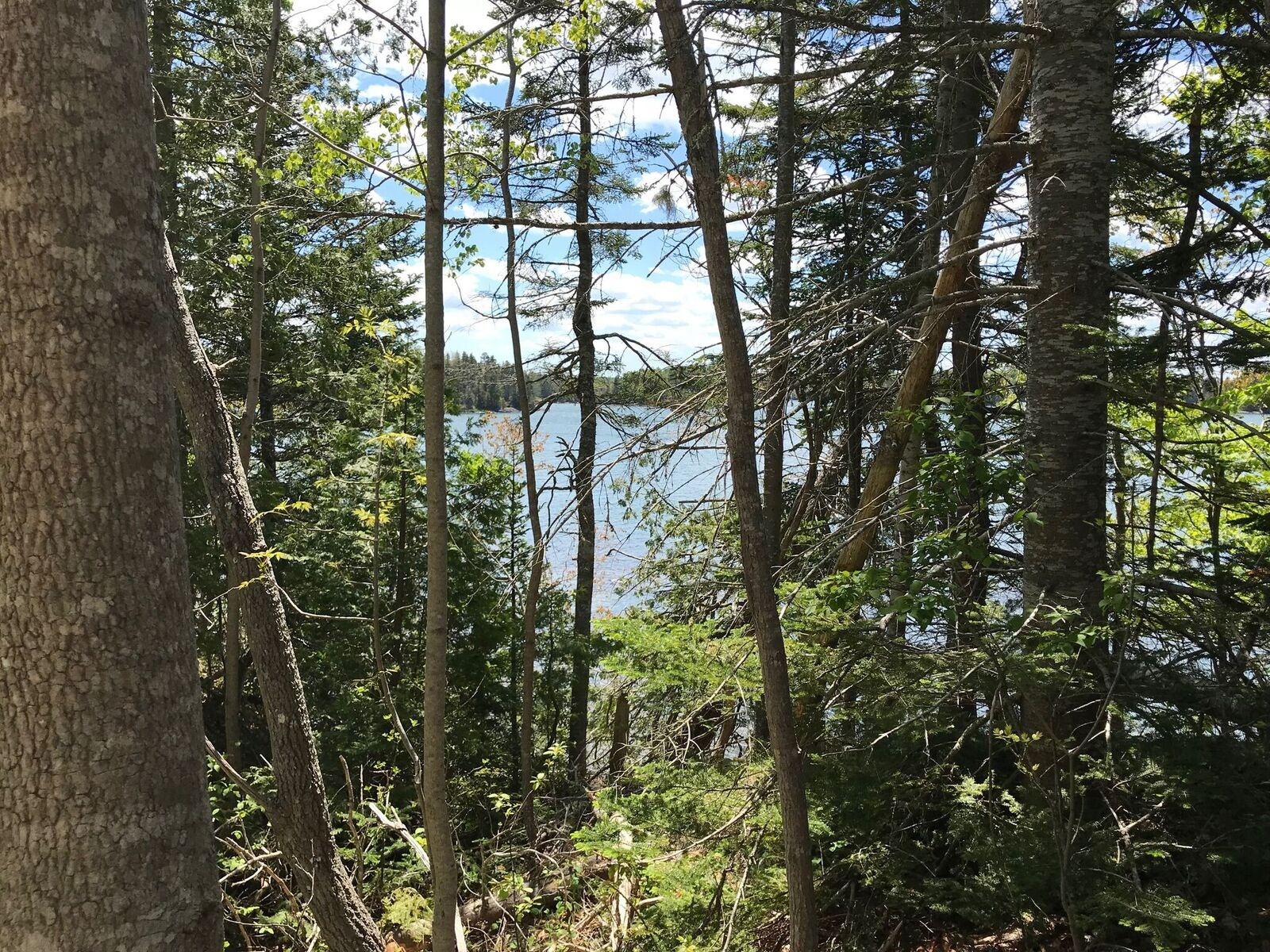 Maine Coastal Land for Sale in Lubec