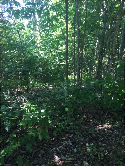 5 Acres of Wooded, Hilly Land in Perry County, TN $7,500