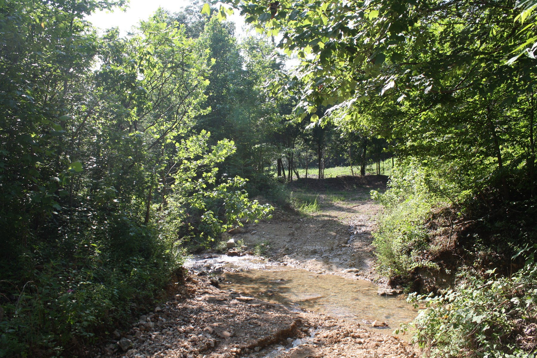 49.06 Acres w/ Creek Great for Hunting or Building, $98,000